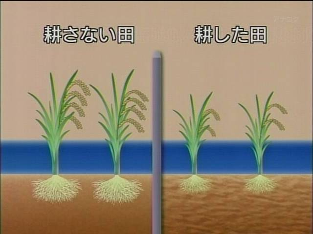 耕さない田